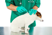 Antiparasitic cure for dog — Stock Photo