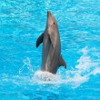 Dolphin — Stock Photo #27357033