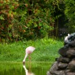 Beautiful pink flamingo — Foto de Stock