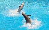 Dolphins — Stockfoto