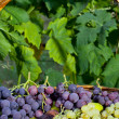 Basket of grapes and figs — Stock Photo