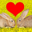 Tow cute rabbits in love — Stock Photo #29060735