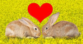Tow cute rabbits in love — Stock Photo