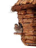 Birdhouse with little sparrow — Stock Photo