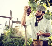 Farmer in the vineyard — Stock Photo