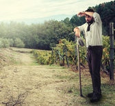 Farmer in the vineyard — Foto Stock
