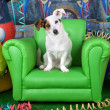 Photos of carnival with a jack russell on a green armchair — Stock Photo