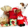 Gift boxes with cute little dog — Stock Photo