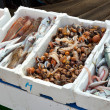 Fresh fish for sale at the harbor — Stock Photo