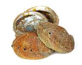 Four abalone shells — Stock Photo