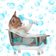 Cat in the bathtub — Stock Photo