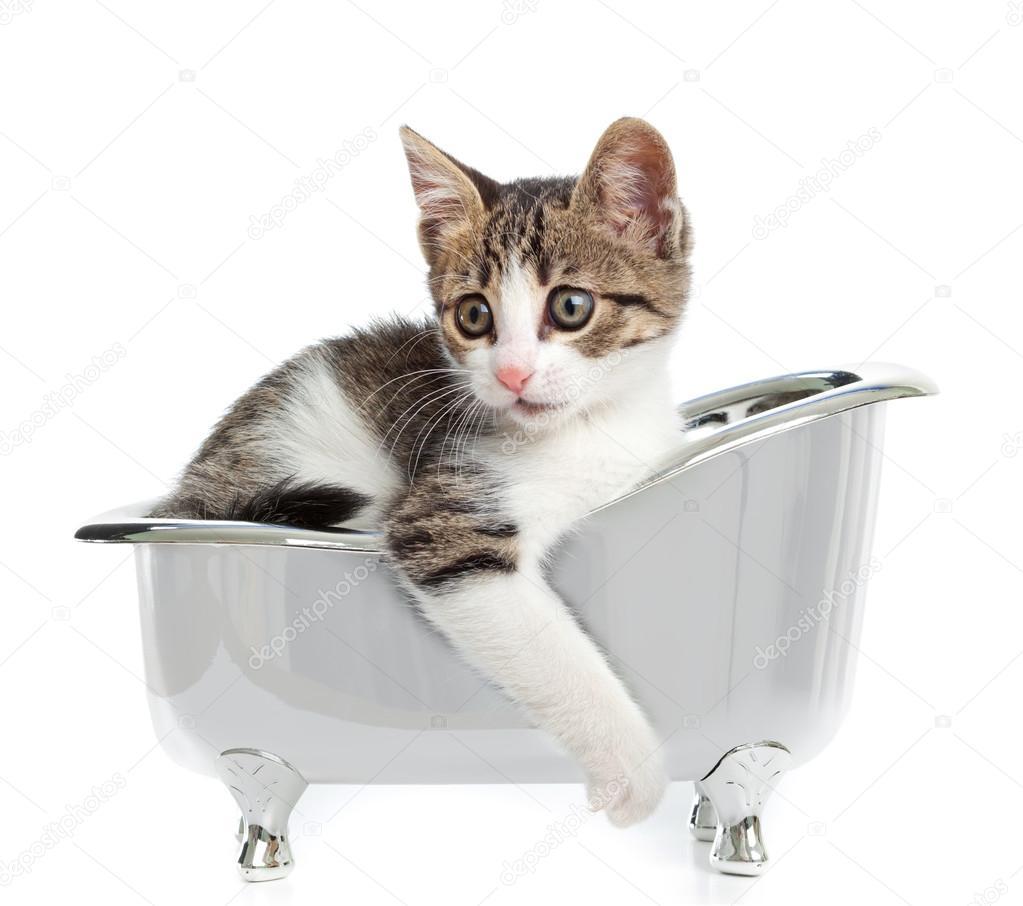 Кот прячется в ванной