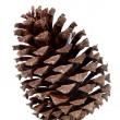 Stock Photo: Brown pine cone