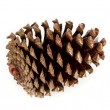 Brown pine cone — Stock Photo #38316699