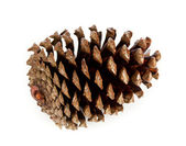 Brown pine cone — Stock Photo