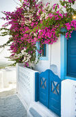 Bougainvillea in Santorini island — Stock Photo