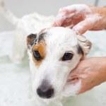 Dog taking a bath in a bathtub — Stock Photo #38932607