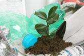 New plant growing from trash — Stock Photo