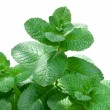 Fresh mint — Stock Photo #39482305