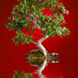 Bonsai tree — Stock Photo #40368971