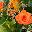 Beautiful bouquet of orange roses. — Stock Photo #40541311