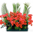 Stock Photo: Flowerpot with small red roses and branches of cycas revoluta