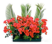 Flowerpot with small red roses and branches of cycas revoluta — Stock Photo