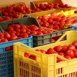 Stock Photo: Boxes of tomatoes