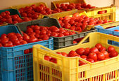 Boxes of tomatoes — Stock Photo