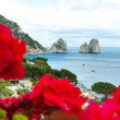 Red geraniums with Faraglioni in background, Capri island. — Stock Photo
