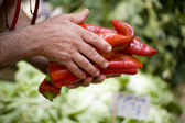 Red peppers from grocer — Stock Photo