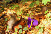 Two red squirrels. — Stock Photo