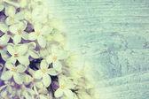 Fondo suave con lilas — Foto de Stock