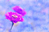 Flower and reflection. Retro background. — 图库照片