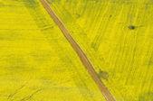 黄色の方法 — ストック写真