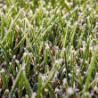 Green grass lawn in white frost — Stockfoto