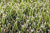 Green grass lawn in white frost — Stock Photo
