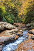Creek rushing through the forest — Stock Photo