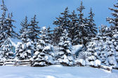 Winter trees under snow — Stock Photo