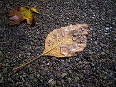 Yellow leaf on gray pebbles covered in water droplets. — Stock Photo