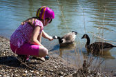 Girl feeding geese on river shore — Stock Photo