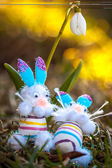 Toy easter bunnies lounging in the grass under a white snowdrop — Stock Photo