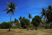 Life on the island of Gili Air — Stock Photo