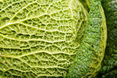 Leaves of savoy cabbage — Stock Photo