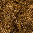 Dry yellow hay — Stock Photo