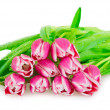 Stock Photo: Bouquet of pink tulips