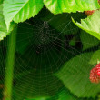 Stock Photo: Spiderweb