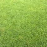 Lawn — Stock Photo #21978411