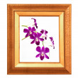 Foto de Stock  : Flower frame.