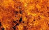 Feuerrot. — Stockfoto